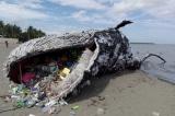 12 bức ảnh cho thấy thiên nhiên đang kêu cứu