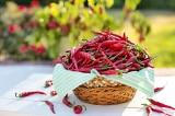 4 lô ớt và tôm Việt Nam xuất khẩu sang Úc dính chất cấm