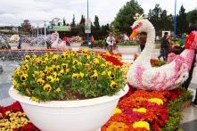 Đến Đà Lạt tận hưởng không khí tưng bừng của Festival Hoa 2017