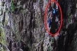 Tuyệt kỹ gia truyền ở Quý Châu: Leo núi tay không hái thảo dược (video)