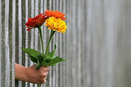 Cho đi là một loại hạnh phúc, càng là một loại biết ơn