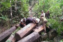 Đến cuối 2017, có thể kiểm soát từng cánh rừng trên toàn quốc