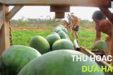 Video: Những vụ mùa thu hoạch 'nhàn nhã' nhờ có máy móc