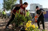 Người dân chung tay xây dựng vườn tưởng niệm các nạn nhân trong vụ xả súng Las Vegas
