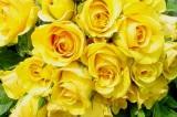 """""""Bây giờ tôi đã biết bí mật vì sao những bông hoa gục đầu chán nản"""""""