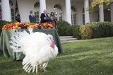 Ông Donald Trump thực hiện nghi thức thả gà tây