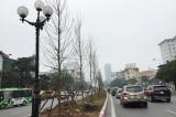 Hà Nội xin trồng 600.000 cây xanh không qua đấu thầu