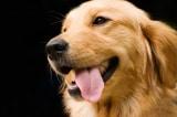 Hình tượng loài chó trong dân gian