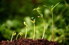 Thiện niệm khiến mảnh đất dẫu bạc màu cũng tìm được hạt giống phù hợp