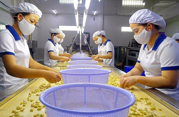 Nhiều nhà máy chế biến điều Việt Nam đóng cửa