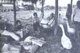 Sơ lược về số phận tư sản miền Nam ngay sau 1975