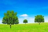 Giấc mơ của 3 cái cây