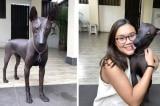 Chú chó hiếm có bộ lông sáng bóng bị nhầm lẫn là 'tượng kim loại'