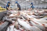 Xuất khẩu cá tra sang Mỹ đạt hơn 2 tỷ USD