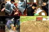 Xuất hiện dịch tả lợn Châu Phi tại Việt Nam