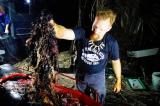 Cá voi chết dạt bờ với hơn 40 kg rác thải nhựa trong bụng