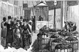 Đại khủng hoảng phân ngựa năm 1894