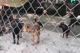 Đàn chó dữ cắn chết bé trai 7 tuổi: Đâu là trách nhiệm người nuôi chó?