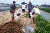 Hà Tĩnh: Ốc hương chết hàng loạt, thiệt hại hàng tỷ đồng
