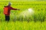Thuốc diệt cỏ gây ung thư: Vẫn được buôn bán, sử dụng sau 1 năm cấm