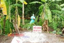 Bình Phước: Xuất hiện ba ổ dịch tả lợn châu Phi