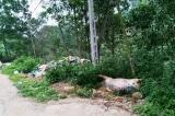 Quảng Nam: Dân bức xúc vì phải nộp tiền tiêu hủy lợn bệnh