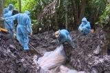 Xử lý đối tượng trục lợi tiền tiêu hủy dịch tả lợn châu Phi