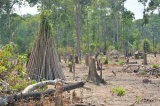 Gia Lai: Thêm hơn 1.200 ha rừng bị mất trong tay Ban quản lý rừng