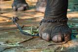 Chuyện về võ: Hội chứng con voi bị xích