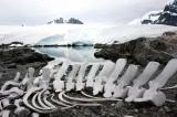 Nam Cực đã được hình thành như thế nào?