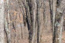Bạn có tìm thấy con báo Amur trong bức ảnh này không?