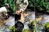Cần minh bạch thông tin về loại dầu thải đổ vào nguồn nước sông Đà