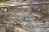 'Nước sạch sông Đà nhiễm dầu thải': Nhiều câu hỏi còn bỏ ngỏ