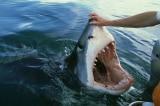 """9 video quay được cảnh """"mặt cận mặt"""" với cá mập"""