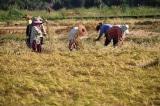 Trung Quốc: Thương chiến kéo dài dẫn đến nguy cơ khủng hoảng lương thực