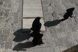 Al Arabiya: Số người chết do COVID-19 tại Iran tăng lên 18