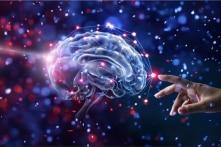 Vai trò của não bộ thực sự là gì?