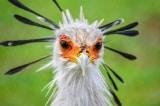 20+ loài chim tuyệt đẹp có thể bạn chưa từng nghe đến (P.1)