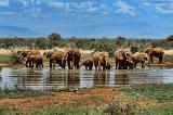 Hơn 100 con voi Thái Lan được trở về quê nhà giữa dịch bệnh