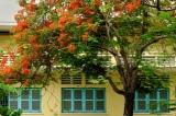 """""""Trường học cần cây xanh"""" – Thông điệp giữa cơn sợ hãi cây xanh"""