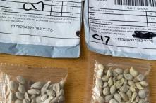 27 bang tại Mỹ cảnh báo người dân về hạt giống bí ẩn từ Trung Quốc