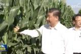 TQ thiếu hụt gần 10 triệu tấn lương thực, ông Tập kêu gọi không lãng phí